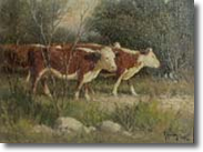 Original Painting White Face Cattle by G. Harvey