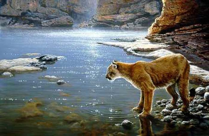 canyon creek cougars personals Densities of native fish were three times higher in streams in areas where cougars were common (north creek) than where cougars were rare (zion canyon.